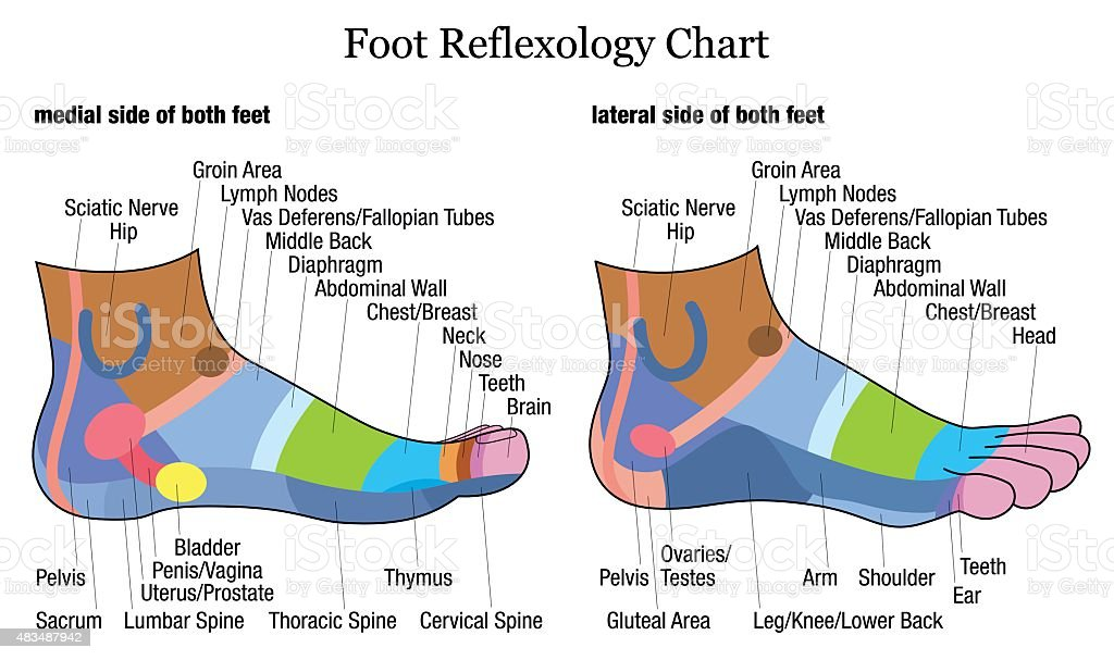 Foot Reflexology Side Profile Lateral Medial View Stock Vector Art ...