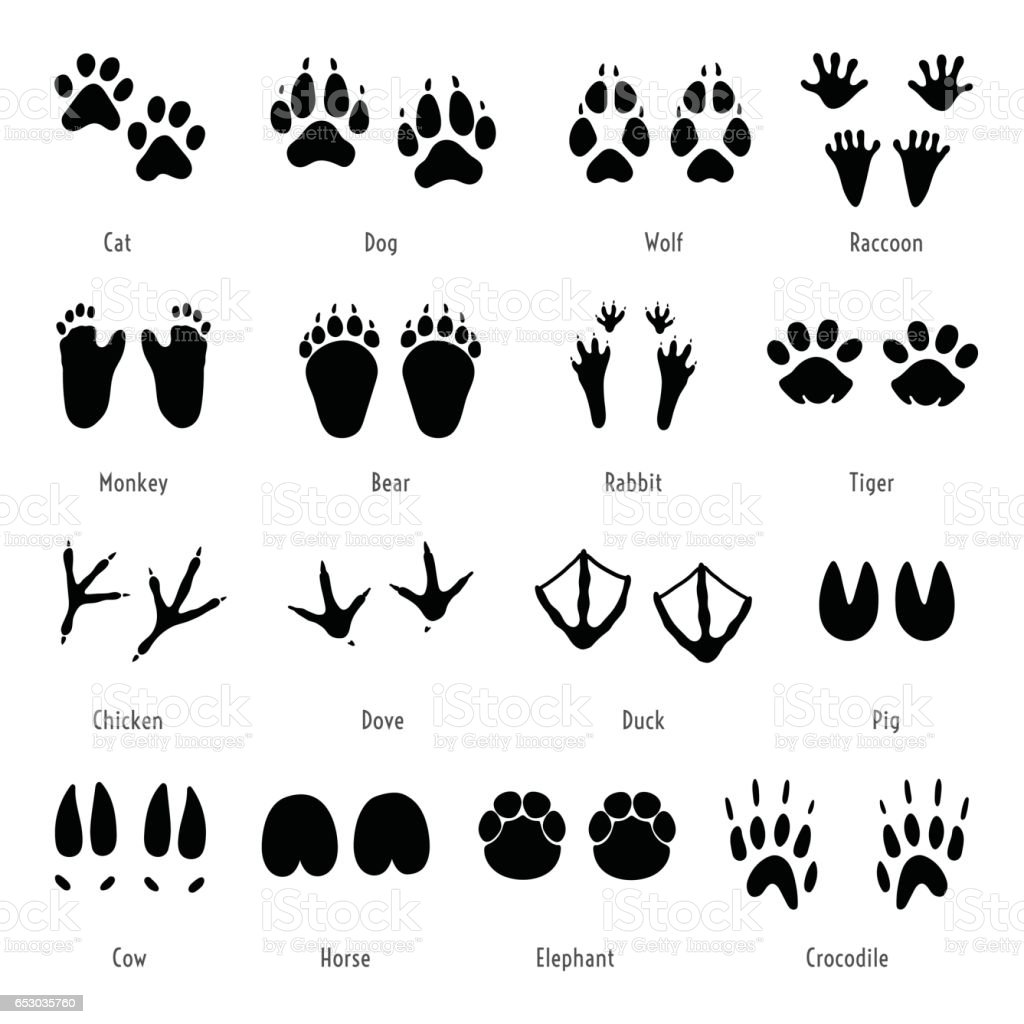 Foot trail vector. Animal footprint set. Silhouettes of tracks vector art illustration