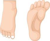 illustration of foot vector