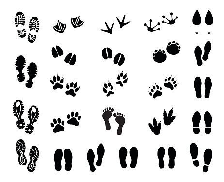 Footprint set vector illustration