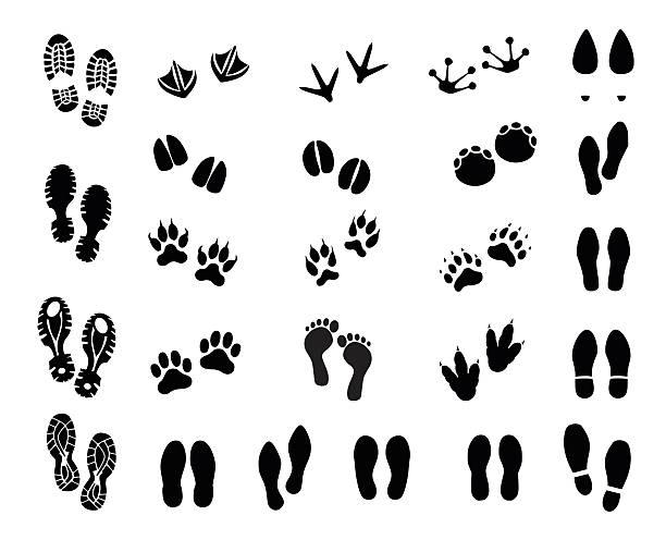 Footprint set vector illustration Footprint set  - vector illustration isolated on white background female animal stock illustrations