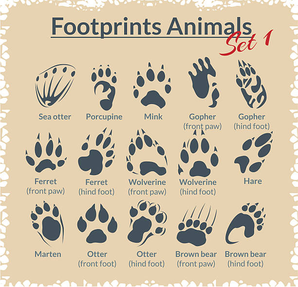 footprints animals - vector set. - otter stock illustrations, clip art, cartoons, & icons