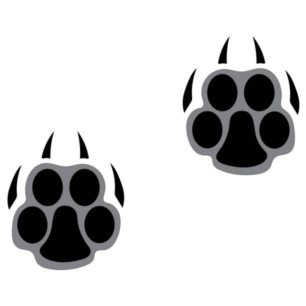 illustrazioni stock, clip art, cartoni animati e icone di tendenza di footprints of a big cat. panther or tiger traces - ocelot