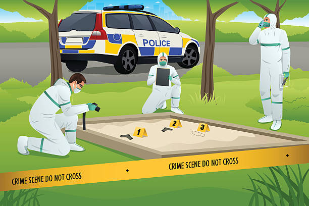 Forensic Working on a Crime Scene A vector illustration of forensics working on a crime scene crime scene stock illustrations