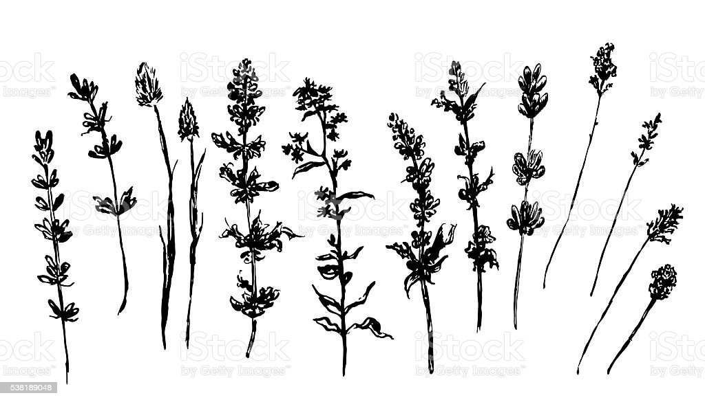 forest and meadow grasses sketch vector illustration vector art illustration