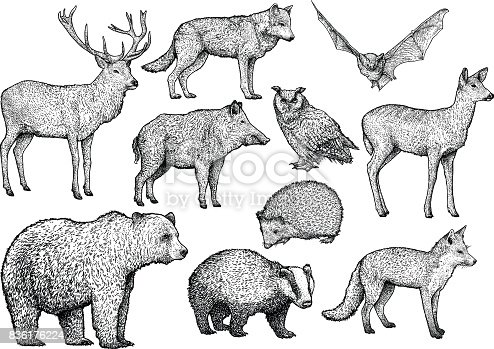 istock Forest animal illustration, drawing, engraving, ink, line art, vector 836176224