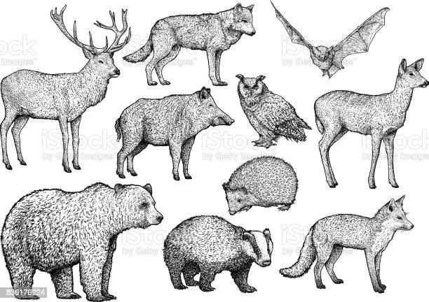 Forest animal illustration drawing engraving ink line art vector vector id836176224?b=1&k=6&m=836176224&s=612x612&h=y2l61jkygm7 562fznuca2ey7 zy9aksfnk1omdkati=