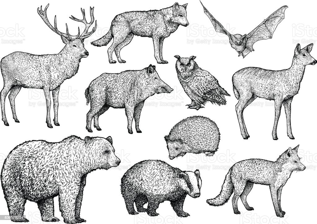 Forêt des illustrations animale, dessin, gravure, encre, dessin au trait, vecteur - Illustration vectorielle