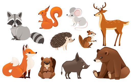 Forest animal set. Colored animal icon collection. Predatory and herbivorous mammals. Flat vector illustration isolated on white background