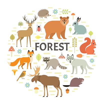 Forest animals background
