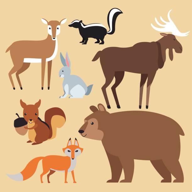 Forest animals cartoon Forest animals cartoon over white background vector illustration graphic design skunk stock illustrations