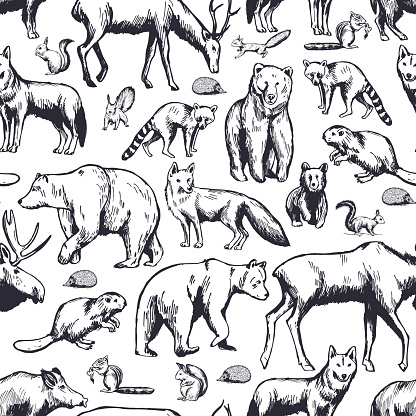Forest animals on white background. Vector  pattern.