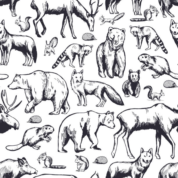 Forest animals on white background. Vector  pattern. Hand drawn forest animals on white background. Vector seamless pattern. cute wolf stock illustrations