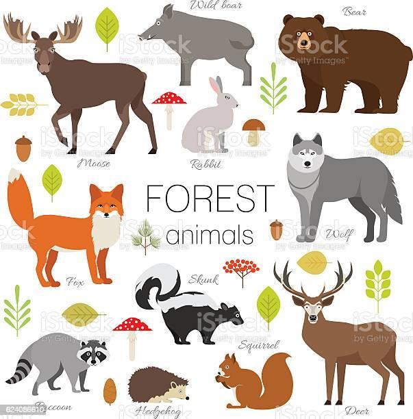 Forest animals set isolated vector moose bear fox wolf skunk vector id624086610?b=1&k=6&m=624086610&s=612x612&h=lvjtsxrf0c8lbsxv asagwmwvnsdaoheuwqtcq0irja=