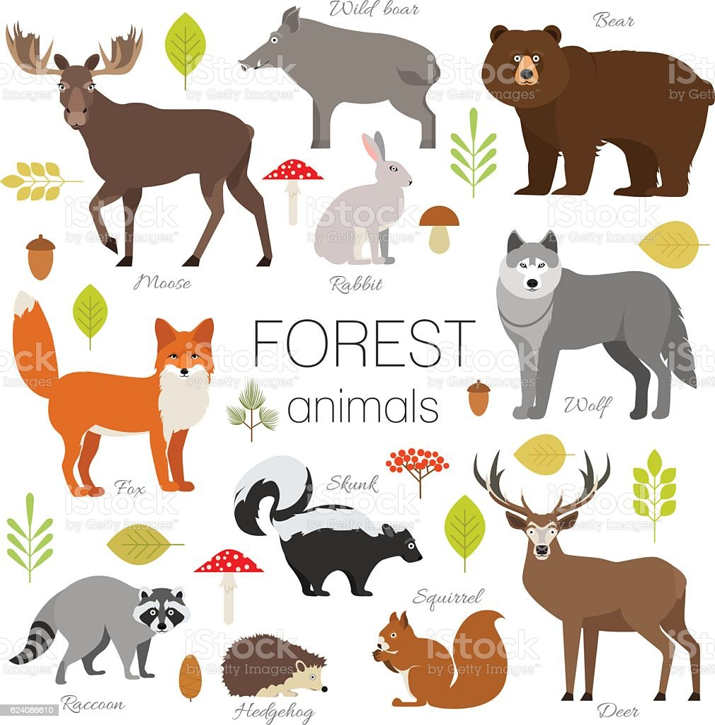 Forest animals set isolated vector. Moose, bear, fox, wolf, skunk vector art illustration