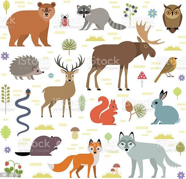 Forest animals vector id601357710?b=1&k=6&m=601357710&s=612x612&h=1nefvny2ziayo9nkrfl nfklixdjdhutufand a8um4=