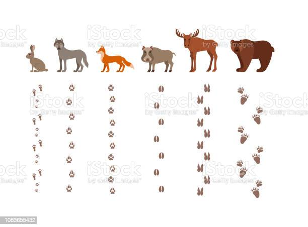 Forest animals with foot prints cartoon style colorful vector vector id1083655432?b=1&k=6&m=1083655432&s=612x612&h=zb2fr0qbjso4v56cdhjbxtjkonavi cfyoxlxibzp6s=