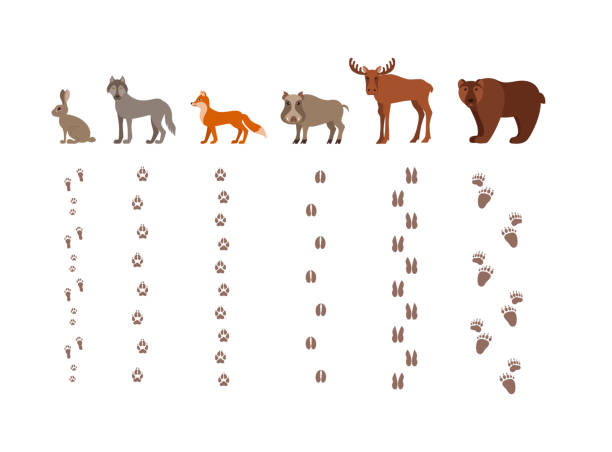 Forest animals with foot prints cartoon style colorful vector illustration Forest animals with foot prints cartoon style colorful vector illustration. Collection of wild nature mammals with tracks silhouette: fox, wolf, bear, hare, elk, boar rabbit animal stock illustrations