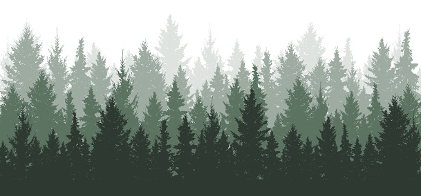 Forest background, nature, landscape. Evergreen coniferous trees. Pine, spruce, christmas tree. Silhouette vector clipart