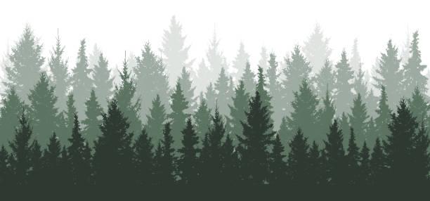 bildbanksillustrationer, clip art samt tecknat material och ikoner med skog bakgrund, natur, landskap. vintergröna barrträd. tall, gran, julgran. silhuett vektor - forest