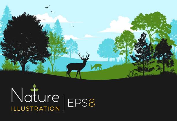 wald-hintergrund mit hirsch - nationalpark stock-grafiken, -clipart, -cartoons und -symbole