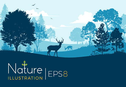 Forest Background With Deer