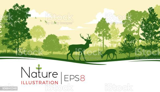 Forest background with deer vector id936840348?b=1&k=6&m=936840348&s=612x612&h=2gnxkgkbifegb5smqcoitshywkns3en3sv u8nryf6m=