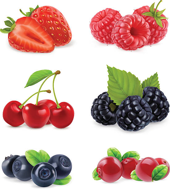 Forest berry. Realistic illustration Forest berry. Sweet fruit. Realistic illustration. 3d vector icon set cherry stock illustrations