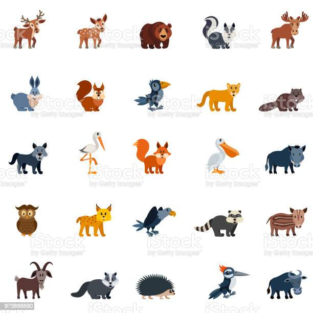 Forest birds and animals vector id973888690?b=1&k=6&m=973888690&s=612x612&h=gfwnvw884cqkg4o iczilfsepbfgiuznisy5yxiy2ag=