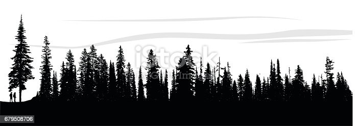 silhouette illustration of a single pine tree and the bordering pine forest.