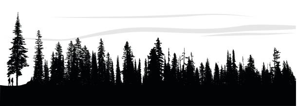 Forest Breeze silhouette illustration of a single pine tree and the bordering pine forest. treelined stock illustrations