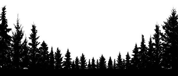 bildbanksillustrationer, clip art samt tecknat material och ikoner med vintergröna, barrträd skogsträd, silhuett vektorbakgrund - forest