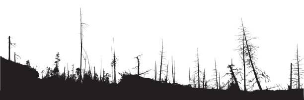 stockillustraties, clipart, cartoons en iconen met forest fire natuurramp - illustraties van bosbrand