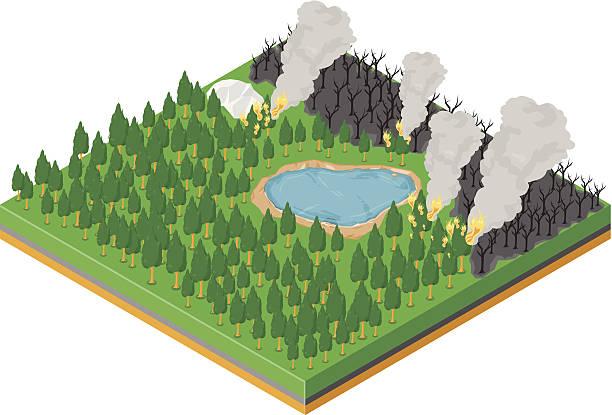 bildbanksillustrationer, clip art samt tecknat material och ikoner med forest fire - skog brand