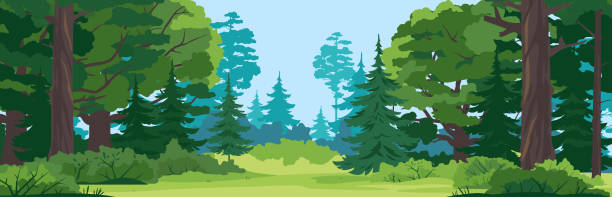 Forest glade nature landscape backgroun Green glade with grass in mixed forest on summer sunny day, spruce trees and bushes in front view, place for camping in the middle of the forest, place for picnic in nature woodland stock illustrations