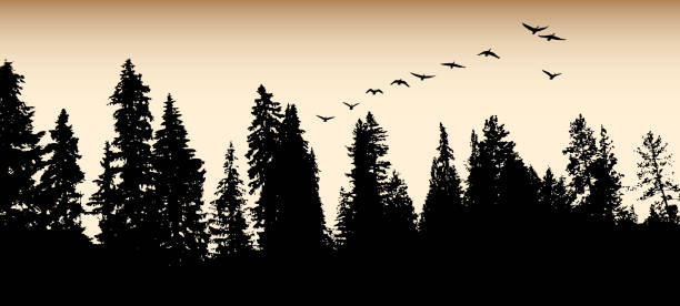 Forest Goose Migration Flight Treeline with sepia sky and geese flying away goose bird stock illustrations