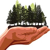 Forest in hands