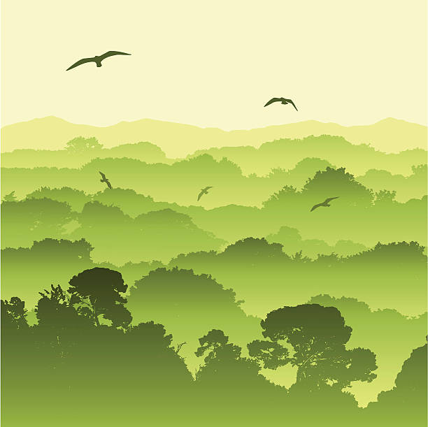 Best Tree Canopy Illustrations, Royalty-Free Vector ...