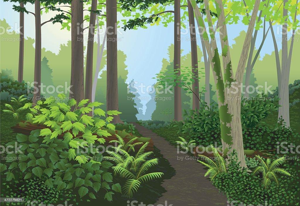 Paisagem de floresta - ilustração de arte em vetor