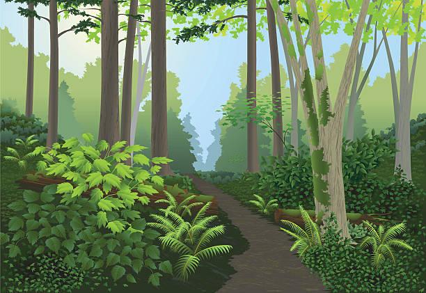 forest landscape - moss stock illustrations