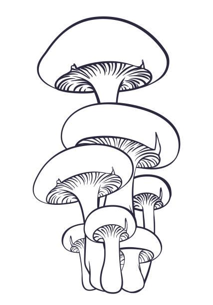 버섯 숲. - 버섯 stock illustrations
