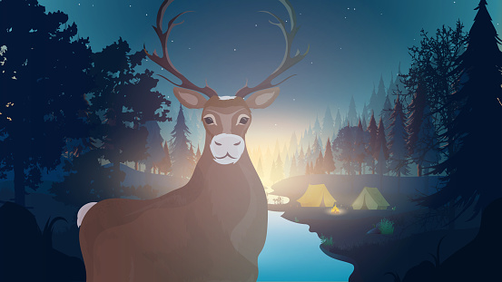 Forest night landscape. Forest with a river. Deer with horns close-up.