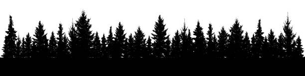 Forest of Christmas fir trees silhouette. Coniferous spruce panorama. Park of evergreen wood. Vector on white background Forest of Christmas fir trees silhouette. Coniferous spruce panorama. Park of evergreen wood. Vector on white background pine tree stock illustrations