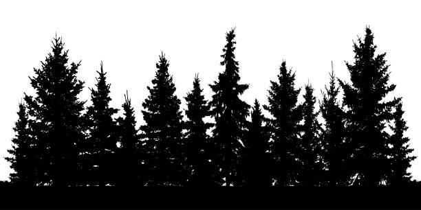 forest of christmas fir trees silhouette. coniferous spruce. vector on white background - forest stock illustrations
