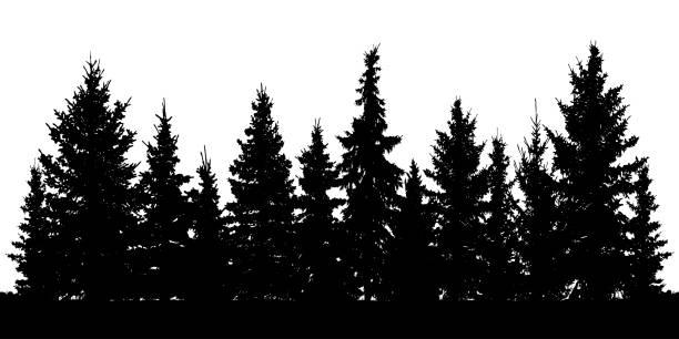 ilustrações de stock, clip art, desenhos animados e ícones de forest of christmas fir trees silhouette. coniferous spruce. vector on white background - forest