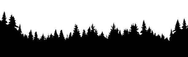 Forest of coniferous trees, silhouette vector background Forest of coniferous trees, silhouette vector background woodland stock illustrations