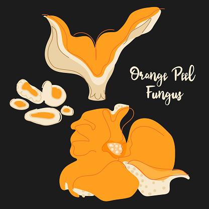 Forest orange mushroom set isolated on black background. orange peel fungus. EPS 10.
