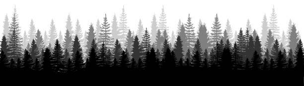 bildbanksillustrationer, clip art samt tecknat material och ikoner med utsikt över skogens panorama. tallar. gran naturlandskap. skogens bakgrund. set av tall, gran och julgran på vit bakgrund. silhuett skog bakgrund. vektorillustration - forest