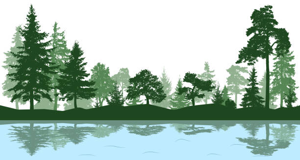forest, park, alley. landscape of isolated trees. reflection of trees in the water. silhouette vector - jezioro stock illustrations