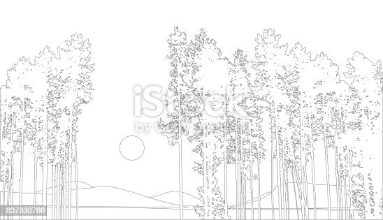 istock Forest Pines 837830766